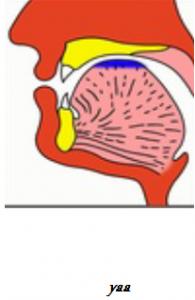 yaa Makharaj Articulation of Tongue