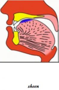 sheen Makharaj Articulation of Tongue